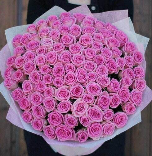 101 rozov roz