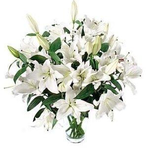 25 lilii