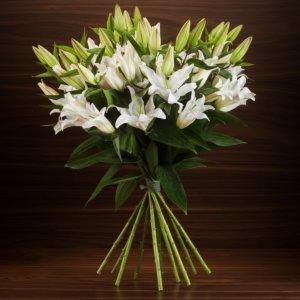 11 lilii