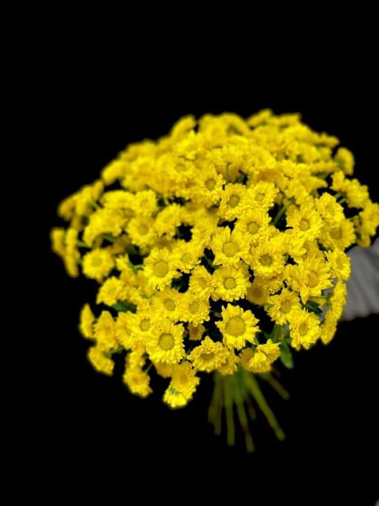 Желтые хризантемы (сантини 55 см)