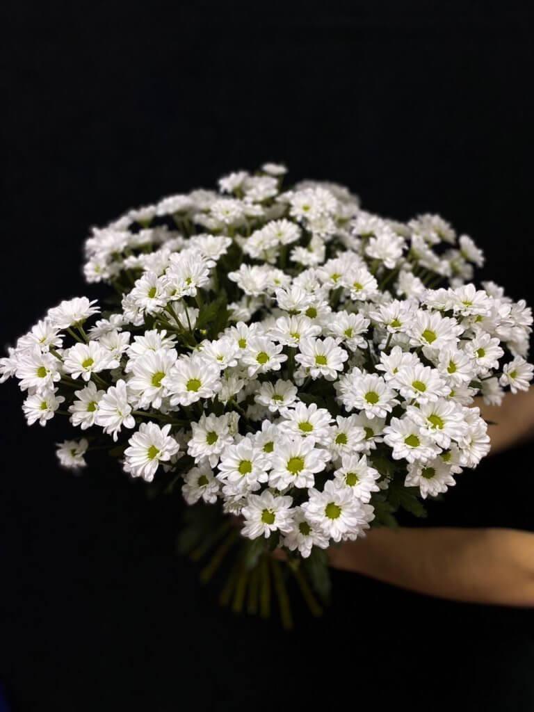 Белые хризантемы (сантини 55 см)