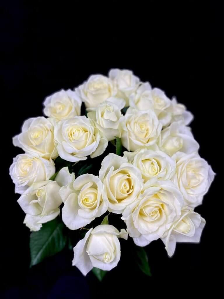 Белые розы 50 см (Avalanche)